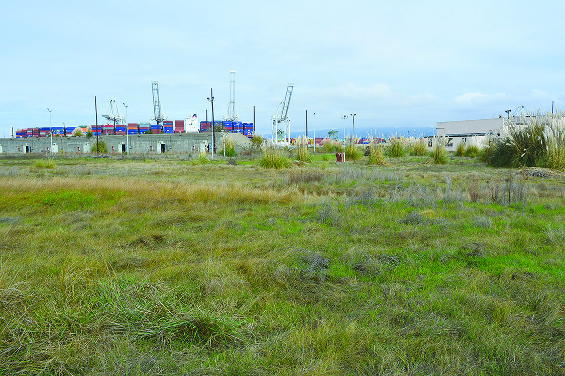Richard Bangert  A concrete weapons bunker and storage building provide a backdrop for a seasonal wetland on Alameda Point's Northwest Territories. The Navy's environmental cleanup plans are on this evening's Restoration Advisory Board's agenda.