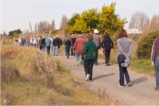 Courtesy alamedaca.gov  The public walks through the future Jean Sweeney Open Space during a city-sponsored tour.