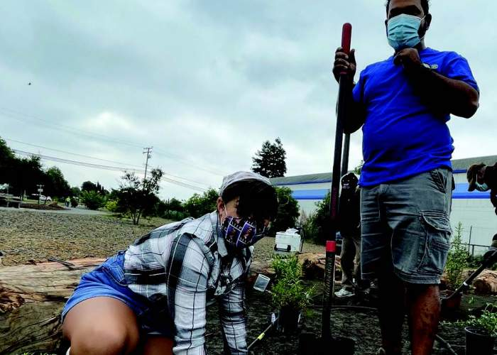 Rotarian Rhush Wanigatunga helps his daughter Amaya dig the hole for a Salvia plant as part of the Monarch Butterfly Habitat Restoration Project.