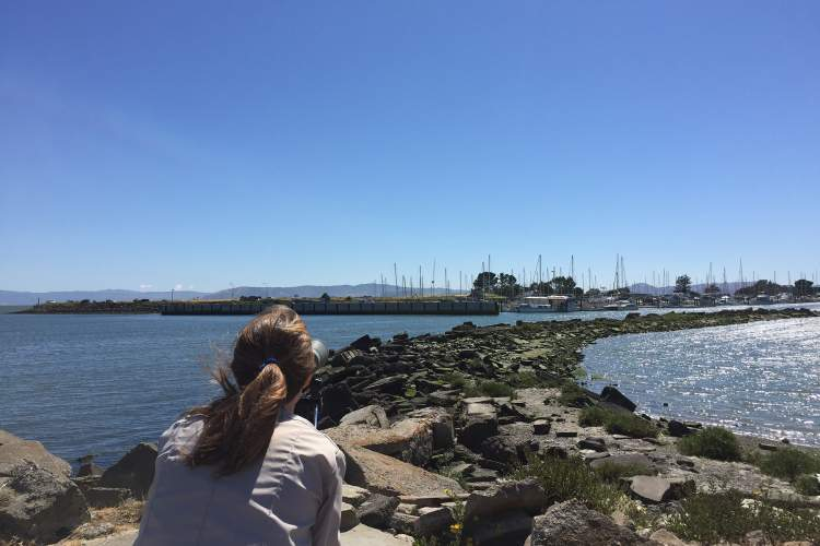 """Junlin """"William"""" Chen  East Bay Regional Park District naturalist, Morgan Dill looks through a spotting scope to observe the California least terns near Ballena Bay."""