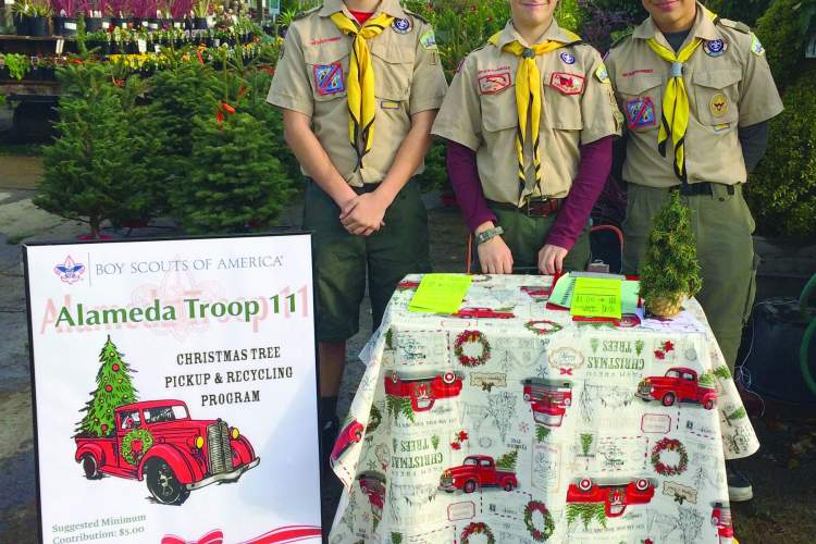 Mary Grace Basco &nbsp&nbsp Troop 11 Boy Scouts Miles Grayson, Keller Brandt and Nathaniel Basco help keep Alameda green with the Christmas Tree Pickup & Recycling Service Project.