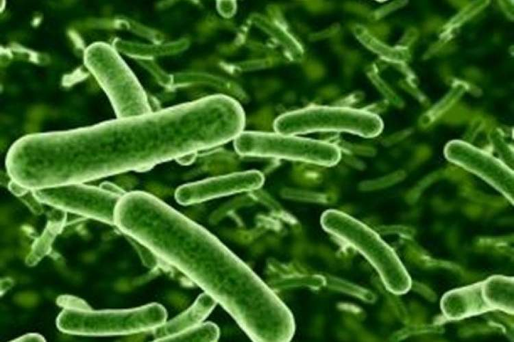 Courtesy conscienhealth.org &nbsp&nbsp&nbsp Probiotic bacteria has proven to be helpful to digestive health. Scientists have been making progress in the study of the human microbiome recently.