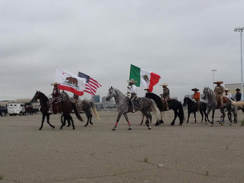 Equestrian entries judged prior to the parade on Encinal Terminals behind the Del Monte building.
