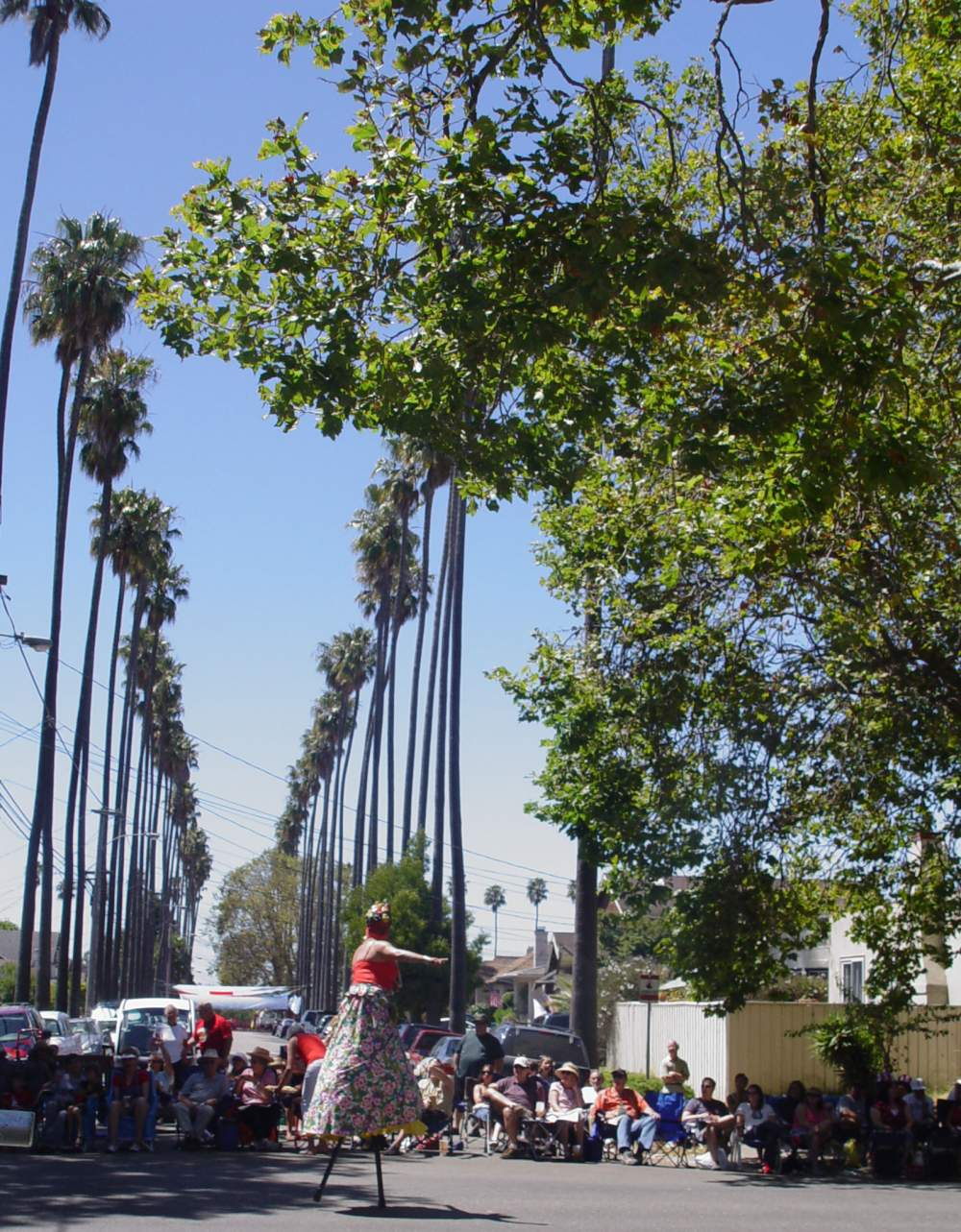 The parade route goes right past the famed Burbank Portola palm trees.