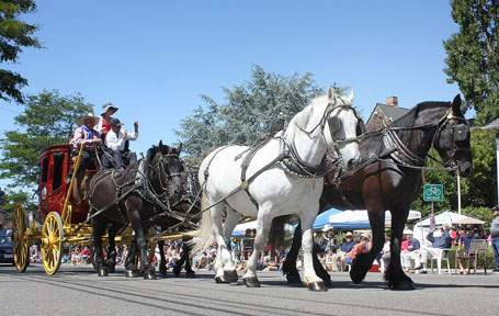 Mayor's Clydesdales