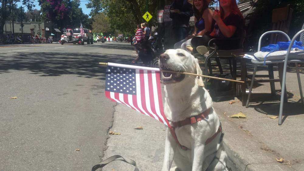 Daisy celebrates the Fourth, Photo by Philip Fairchild