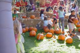 Don't miss the AFD Pumpkin Patch set for Friday, Oct. 21.