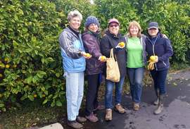 Courtesy photo &nbsp&nbsp The Alameda Backyard Growers' Gleaning Crew is always looking for more volunteers and trees to pick.