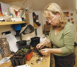 Lori Eanes &nbsp&nbsp Birgitt Evans demonstrates the delicate work of transplanting fall crops from the six packs where they germinate into larger containers or garden beds.