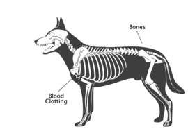 petfoodinstitute.org &nbsp&nbsp Vitamin K is essential in maintaining healthy bones and blood in dogs.