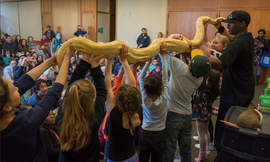 Photos courtesy Alameda Library &nbsp&nbsp Tracy the Animal Guy brought along one particularly large and fascinating specimen, an albino python.