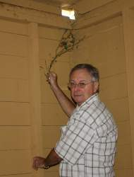 Dennis Evanosky - Alameda Museum curator George Gunn shows the ivy that intrudes on the interior of the carriage house at the Meyers House & Garden.