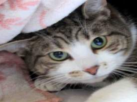 Michael is at the Alameda Animal Shelter now and needs your help to find his forever home.
