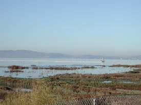 File photo -- Birds take refuge in the Elsie Roemer Bird Sanctuary as oil booms help corral an oil spill on San Francisco Bay in this 2010 photograph.