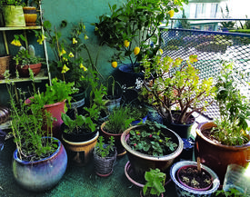 Alison Limoges &nbsp&nbsp The lack of a backyard doesn't mean a garden is out of the question. Follow some simple guidelines to get a small-space garden going.